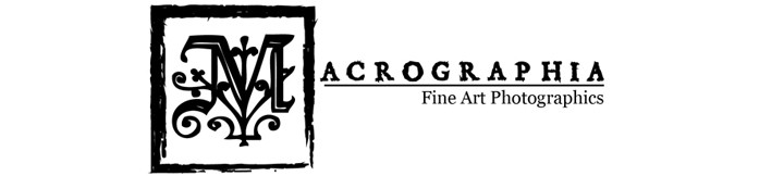 Macrographia Fine Art Photographics