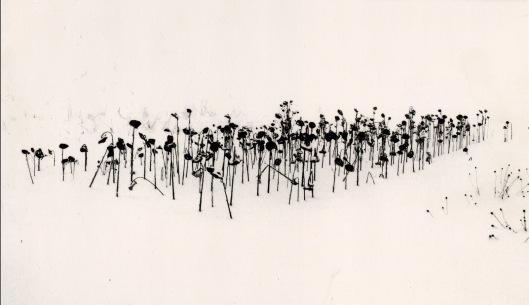 MK_Sunflowers Hokaido